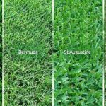 best types of sod grass for louisiana