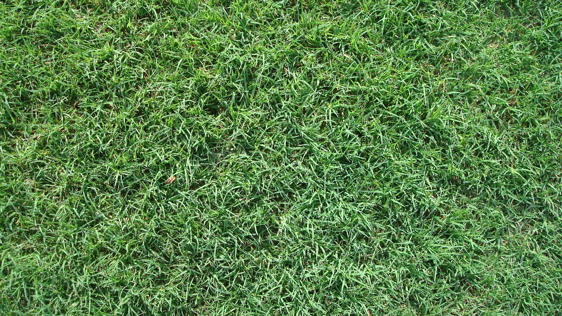 Bermuda grass sod in Louisiana