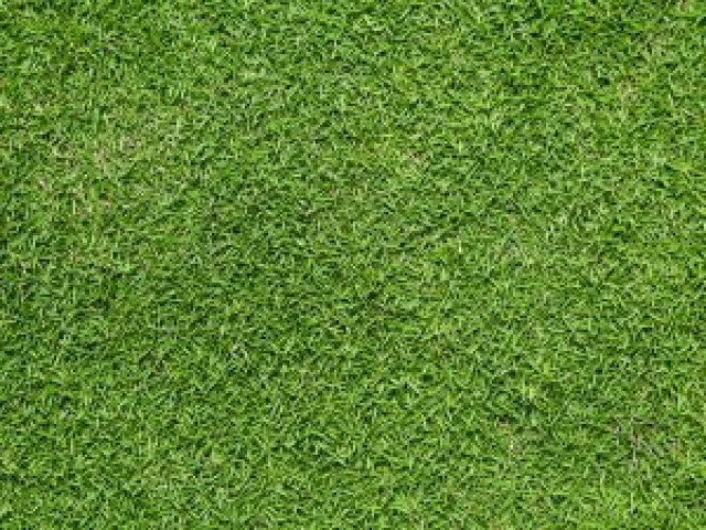 bermuda grass sod for sale delivery and installation