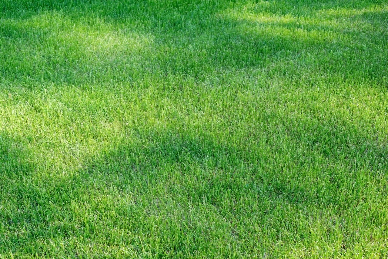 Centipede Grass Sod for sale in Baton Rouge, Denham Springs, Prairieville, Gonzales, Zachary Louisiana