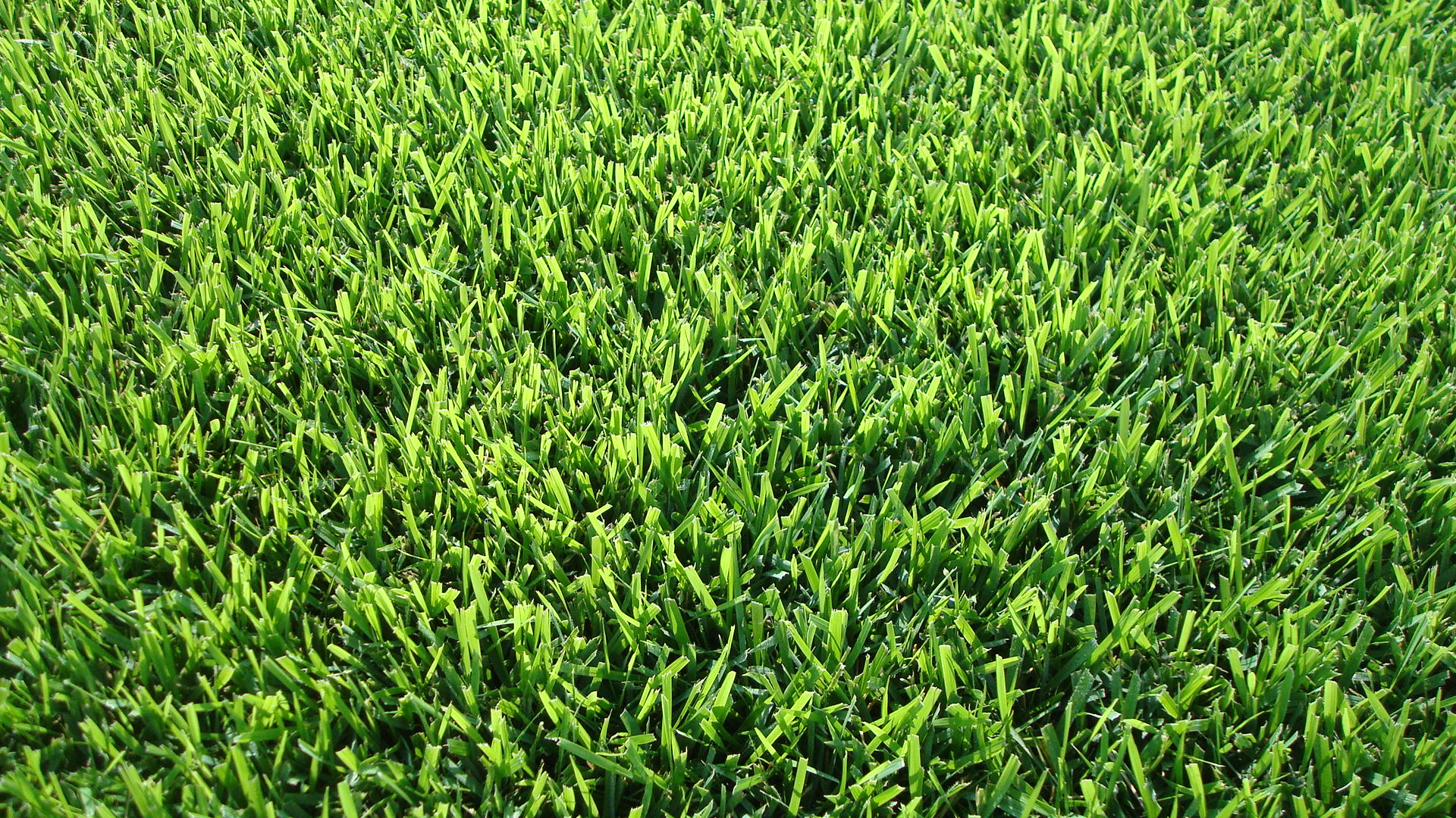Zoysia Grass Sod Louisiana