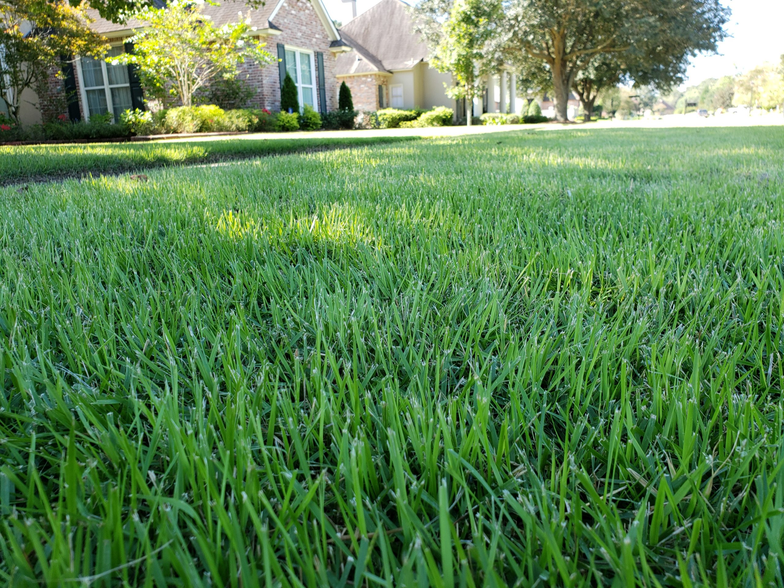 Baton Rouge Sod - sod for sale, delivery, and sod installation