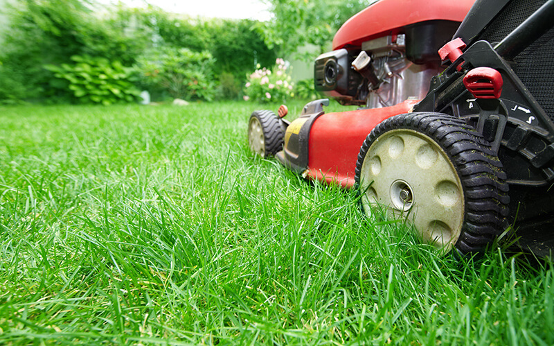 mowing your new lawn sod grass