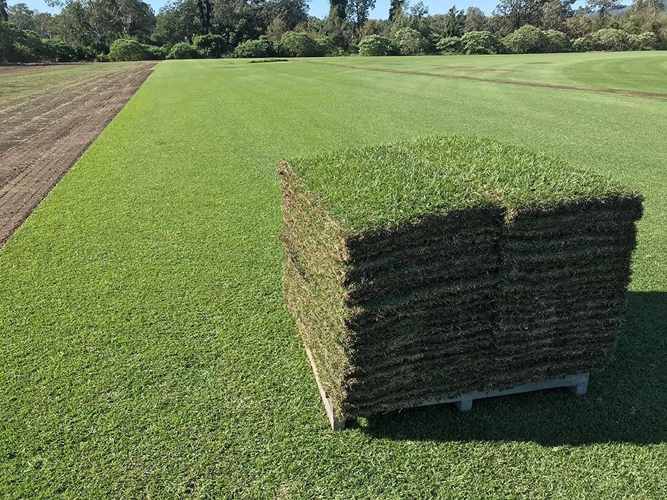 pallet of sod Zoysia grass sod by the pallet
