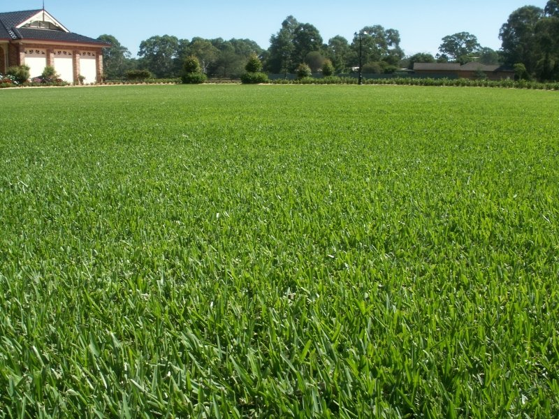 Saint Augustine grass sod installation delivery louisiana