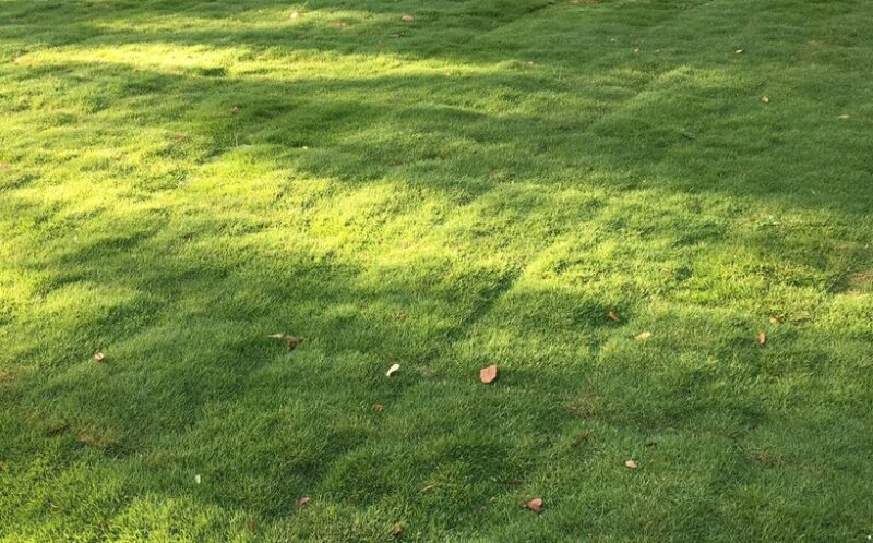 zoysia grass sod installation in Louisiana